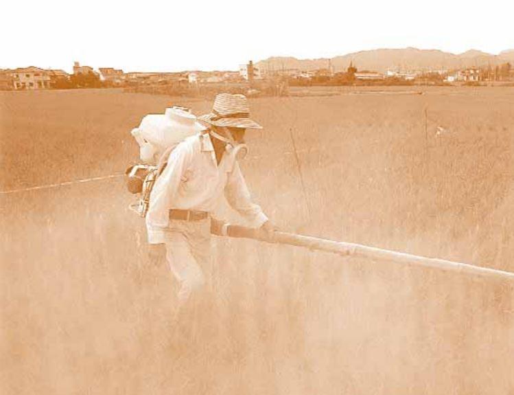 Pesticidi inquinamento