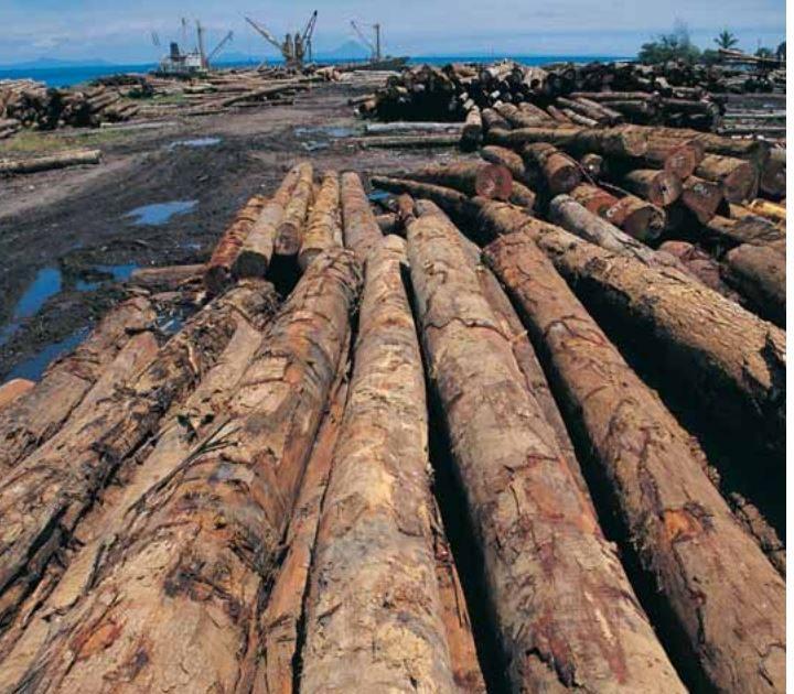 Il legno nelle costruzioni