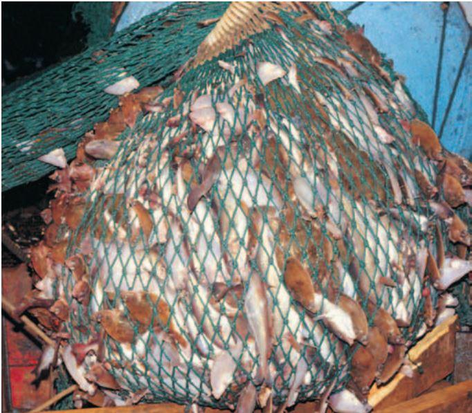 Metafora pesci nella rete 2